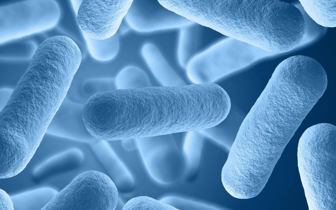 Focus op immuunsysteem en microbioom
